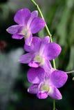 Florece la orquídea fotos de archivo libres de regalías