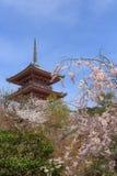 Florece la primavera de Sakura imagenes de archivo