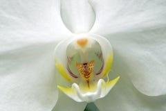 Florece la profundidad baja de la orquídea del campo Imagenes de archivo