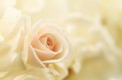 Florece la rosa del rosa del primer del arte Foto de archivo libre de regalías