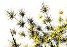 Florece las espinas Fotografía de archivo libre de regalías