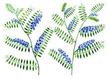 Florece los guisantes del ratón en un fondo blanco Wildflowers e hierba Ilustración de la acuarela Imagen de archivo libre de regalías