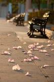 Florece los pétalos en la tierra del callejón Fotografía de archivo