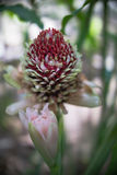 Florece rojo Imagen de archivo libre de regalías