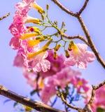 Florece rosa del d3ia Fotos de archivo