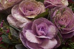 Florece rosas Fotos de archivo libres de regalías