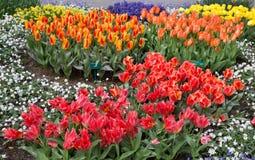 Florece tulipanes en el parque de Keukenhof, Lisse holanda Imágenes de archivo libres de regalías
