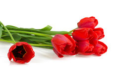 Florece tulipanes rojos Imagenes de archivo