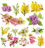 Florecen las flores de la primavera de la lila de la forsythia de la pera de la cereza del manzano Fotografía de archivo libre de regalías