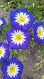 Florecimiento Imagenes de archivo