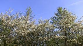 Florecimiento de flores salvajes en primavera Imagenes de archivo