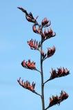Florecimiento de la planta del lino Fotografía de archivo