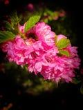Florecimiento de la primavera Imagenes de archivo
