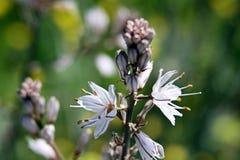 Florecimiento de la primavera foto de archivo