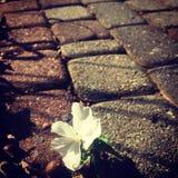 Florecimiento de la vida Fotos de archivo libres de regalías
