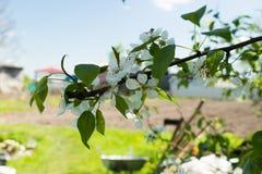 Florecimiento de un árbol Foto de archivo