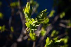 Florecimiento del árbol imagen de archivo libre de regalías