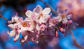 Florecimiento del árbol del flor Imagen de archivo libre de regalías