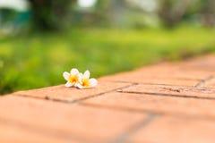 Florecimiento hermoso en la pared Fotos de archivo