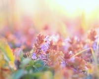 Florecimiento púrpura de las flores Fotos de archivo libres de regalías