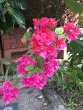 Florecimiento tropical de las flores Imagen de archivo libre de regalías