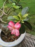 Florecimiento tropical de las flores Imagen de archivo