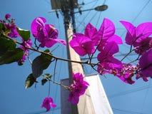 Florecita mieszanki z urbanity obrazy stock