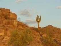 Florença, o Arizona imagens de stock