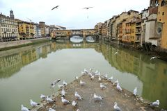 Florence city with seagulls and the famous old bridge , Italy Royalty Free Stock Image