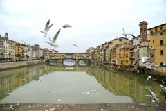 Florence city with seagulls and the famous old bridge , Italy Stock Photography
