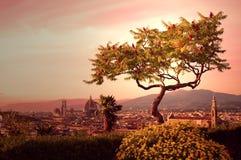 florence drzewo Zdjęcie Royalty Free