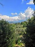 Florence Italy-de reisbomen van het land van de landschapslente groene stock foto's