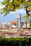 florence katedralny drzewo Obraz Stock