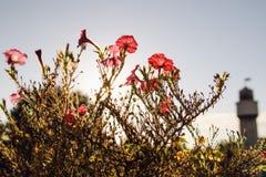 florence kwiaty Zdjęcie Royalty Free