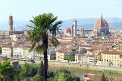 Florence Panorama. From the Piazzale Michelangelo. The palm tree is on focus Royalty Free Stock Images