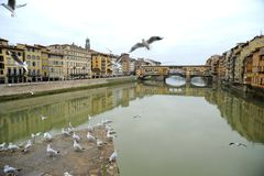 Florence river with seagulls and the famous old bridge , Italy Royalty Free Stock Photography