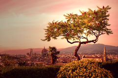 Florence Tree. Tree on Piazzale Michelangelo, Florence, Italy royalty free stock photo