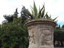 Florero antiguo con la planta Imágenes de archivo libres de regalías