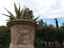 Florero antiguo con la planta Foto de archivo libre de regalías