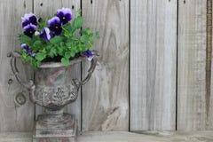 Florero antiguo con las flores púrpuras (pensamientos) Fotos de archivo