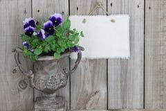 Florero antiguo con las flores púrpuras (pensamientos) y la muestra en blanco Fotografía de archivo