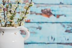 Florero blanco del vintage con los flores de la pera de Bradford Imagen de archivo