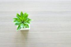 Florero blanco y árbol verde en la tabla fotos de archivo