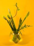 Florero con los narcisos del resorte en fondo amarillo Imagen de archivo libre de regalías