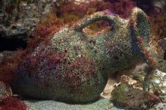 Florero de cerámica del griego clásico en la parte inferior de mar Foto de archivo
