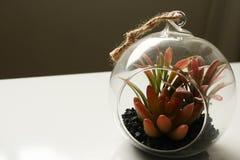 Florero de cristal con las plantas y los cactus imagen de archivo