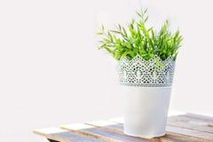 Florero de hierba Fotografía de archivo