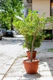 Florero de los árboles de la calle Fotografía de archivo