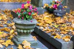 Florero de piedra viejo con las flores rosadas en el sepulcro Imágenes de archivo libres de regalías