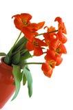 Florero de tulipanes Imagen de archivo